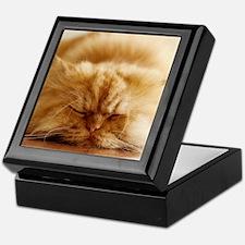 Persian cat sleeping on floor. Keepsake Box