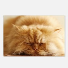 Persian cat sleeping on f Postcards (Package of 8)