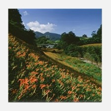 Lily field on mountain range. Fuli To Tile Coaster