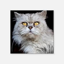 """Persian gray cat. Square Sticker 3"""" x 3"""""""