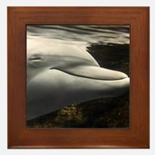 Mateo, young dolphin in Acquario di Ge Framed Tile