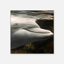 "Mateo, young dolphin in Acq Square Sticker 3"" x 3"""