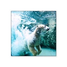 "Polar bear underwater. Square Sticker 3"" x 3"""