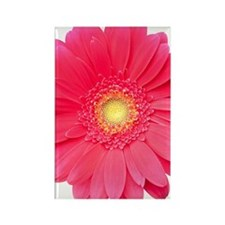 Pink gerbera daisy isolated on wh Rectangle Magnet
