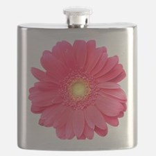 Pink gerbera daisy isolated on white. Flask