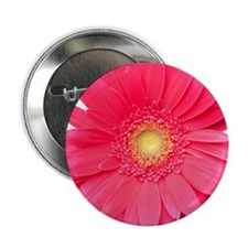 "Pink gerbera daisy isolated on white. 2.25"" Button"