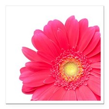 "Pink gerbera daisy isola Square Car Magnet 3"" x 3"""