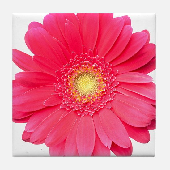 Pink gerbera daisy isolated on white. Tile Coaster