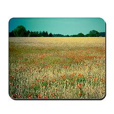 Poppy field. Mousepad