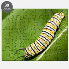 Monarch butterfly caterpillar on a common m Puzzle