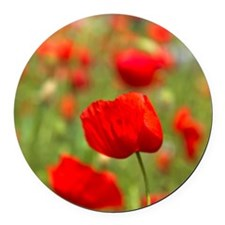 Red poppies in cornfield, France Round Car Magnet