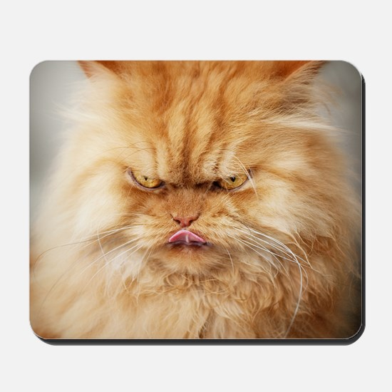 Persian cat looking angrily into camera  Mousepad