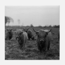 Scottish highland cattle on field, No Tile Coaster