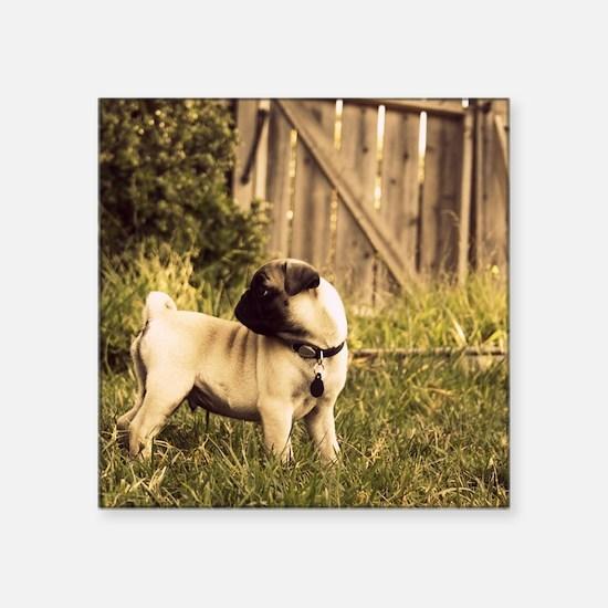 "Pug puppy in a yard Square Sticker 3"" x 3"""