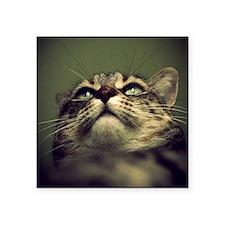 "Portrait of a tabby cat. Square Sticker 3"" x 3"""