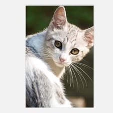 Portrait of kitten, Italy Postcards (Package of 8)