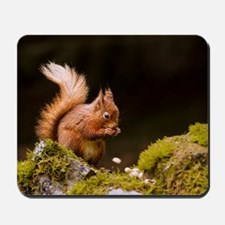 Red squirrel eating nuts in Yorkshire Da Mousepad