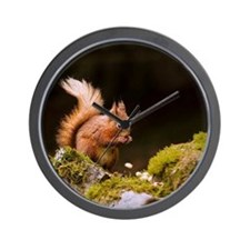 Red squirrel eating nuts in Yorkshire D Wall Clock