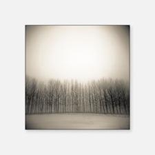 "Row of poplar trees in wint Square Sticker 3"" x 3"""