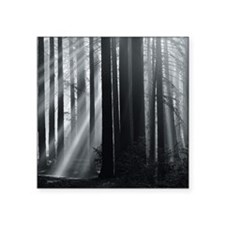"""Sunlight in forest Square Sticker 3"""" x 3"""""""