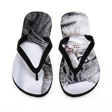 Tabby gray cat and green eyes. Flip Flops