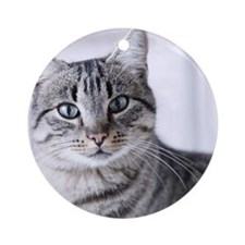 Tabby gray cat and green eyes. Round Ornament