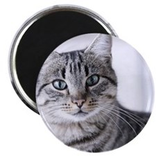 Tabby gray cat and green eyes. Magnet