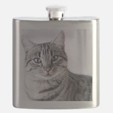 Tabby gray cat and green eyes. Flask