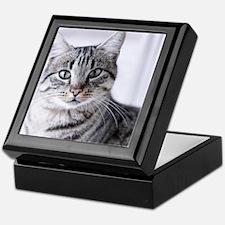 Tabby gray cat and green eyes. Keepsake Box