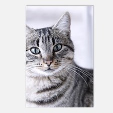 Tabby gray cat and green  Postcards (Package of 8)