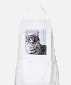 Tabby gray cat and green eyes. Apron