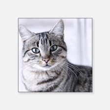 "Tabby gray cat and green ey Square Sticker 3"" x 3"""