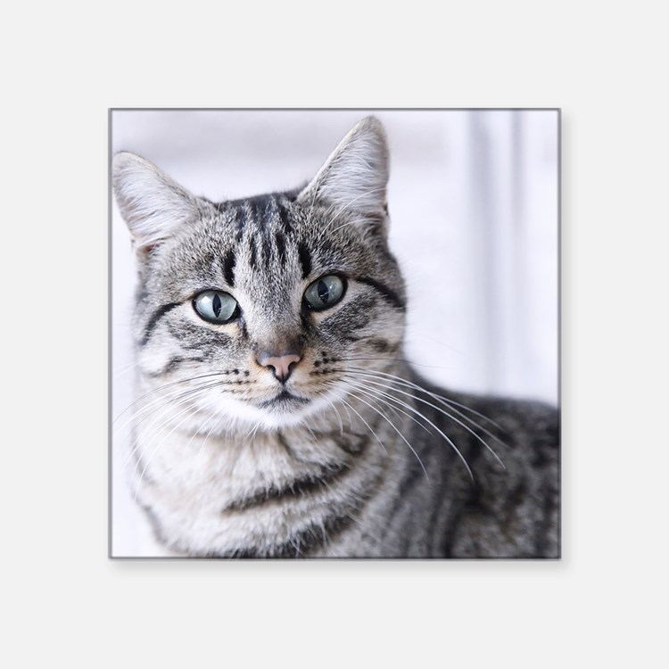 """Tabby gray cat and green ey Square Sticker 3"""" x 3"""""""