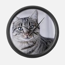 Tabby gray cat and green eyes. Large Wall Clock