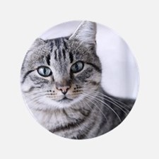 """Tabby gray cat and green eyes. 3.5"""" Button"""