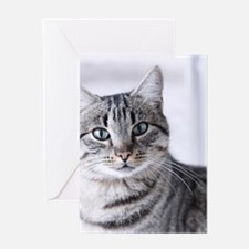 Tabby gray cat and green eyes. Greeting Card