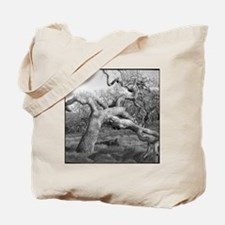 The OK tree in Annadel State Park, near S Tote Bag