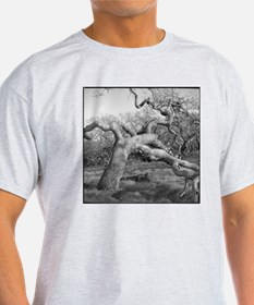 The OK tree in Annadel State Park, n T-Shirt