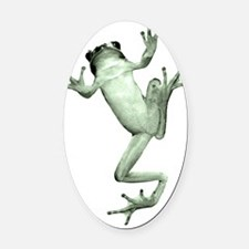 Tree frog against white background Oval Car Magnet