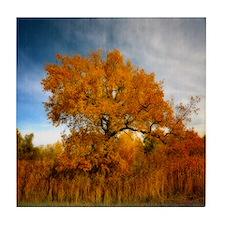 Tree in Autumn. Tile Coaster