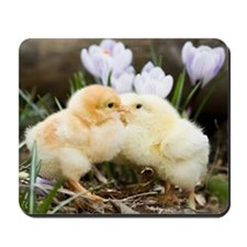 Two yellow baby chicks kissing in front  Mousepad