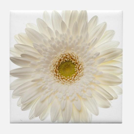 White gerbera daisy isolated on white Tile Coaster