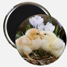 Two yellow baby chicks kissing in front of Magnet