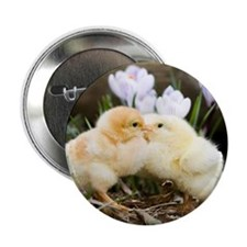"Two yellow baby chicks kissing in fro 2.25"" Button"