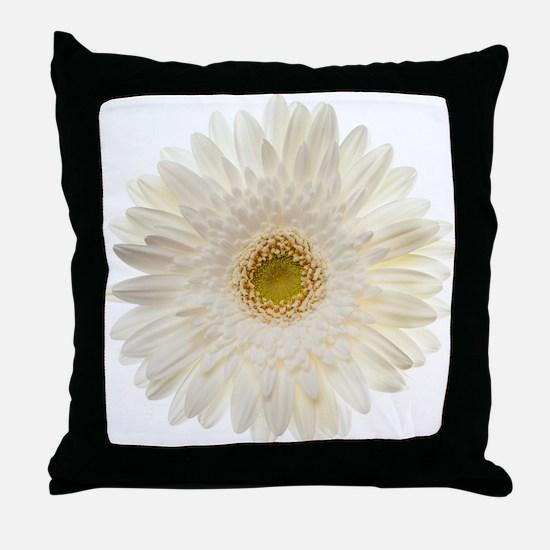 White gerbera daisy isolated on white Throw Pillow