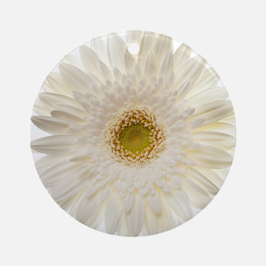 White gerbera daisy isolated on whi Round Ornament