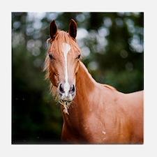 Young brown quarter horse eating gras Tile Coaster