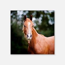 "Young brown quarter horse e Square Sticker 3"" x 3"""