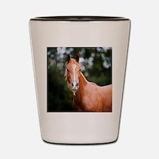 Young brown quarter horse eating grass. Shot Glass