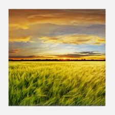 Wheat field with sunset, Spain Tile Coaster